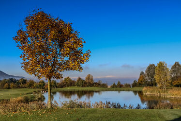 Bild mit Laubbäume, Herbstblätter, Teich, Landschaften im Herbst