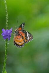 Bild mit Tiere, Schmetterlinge, Blume, Animals, Schmetterling