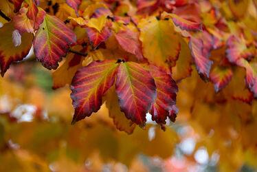 Bild mit Natur, Pflanzen, Herbst, Laubbäume, Blätter, Pflanze, Laubbaum, Blatt, Blattstruktur, Laubblatt, Laubblätter, Herbstblätter, Herbststimmung, Blattstrukturen