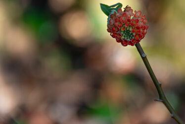 Bild mit Pflanzen, Blumen, Blume, Pflanze, garten, Botanik