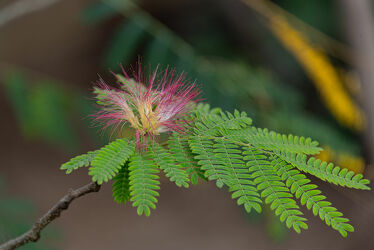 Bild mit Natur, Pflanzen, Blumen, Blume, Pflanze, exotische blumen, exotische Schönheiten, Botanik, exotisch, EXOTIC