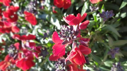 Bild mit Blumen, Rot, Blumen und Pflanzen, Blumen und Blüten, Fotografie Blumen und Pflanzen