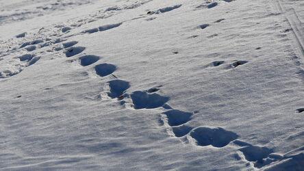 Bild mit Natur, Hügel, Schnee, Weiß, Winteraufnahmen, Schnee in den Bergen, Details, Vogesen
