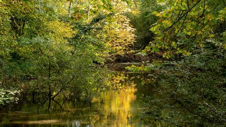 Bild mit Natur, Wasser, Bäume, Herbst, Laubbäume, See, Farbenspiel, Wasseroberfläche, Reflektionen im Wasser