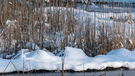 Bild mit Natur, Winter, Schnee, Tageslicht, Wald, winterlandschaft, Weiherrand, eingefroren
