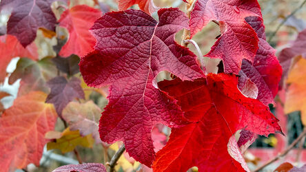Bild mit Rot, Herbst, Makrofotografie, Makroaufnahme, farbenfroh, Details