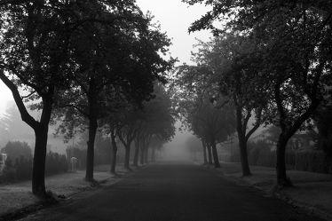 Bild mit Natur,Landschaften,Bäume,Nebel,Baum,Weg,Görlitz,Allee