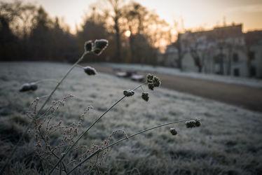 Bild mit Natur, Winter, Gras, Görlitz, Frost, Morgenstimmung, Morgenlicht