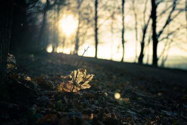 Bild mit Natur, Landschaften, Herbst, Sonnenuntergang, Wald, Blätter, Görlitz, Herbstblätter, Lichteffekt