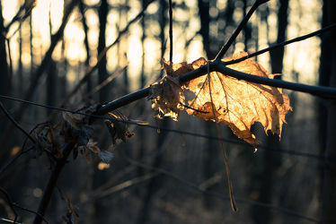 Bild mit Natur, Landschaften, Herbst, Sonnenuntergang, Sonnenaufgang, Wald, Blätter, Görlitz, Herbstblätter