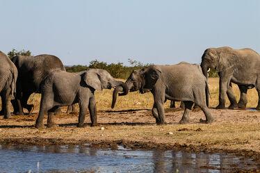 Bild mit Natur, Elephant, Elefanten, Wildtiere, Herde, familie, namibia, Wasserloch