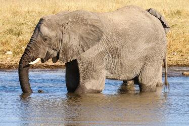 Bild mit Natur, Elefant, Afrika, Wildtier, namibia, Wasserloch