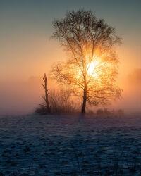 Bild mit Winter, Sonnenaufgang, Baum, Landschaft, Sonnenstrahlen, Sonnenlicht, Lichtstimmung, Niedersachsen, Hammeniederung, Teufelsmoor