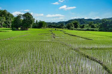Bild mit Natur, Reisen, Reisefotografie, südostasien, Thailand, Reisanbau, Vietnam