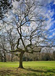 Knorriger Baum im Park