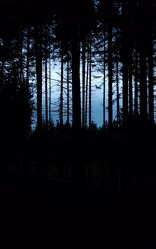Bild mit Wald, Düsteres, Nacht, dunkel