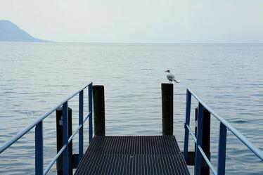 Bild mit Natur, Wasser, Vögel, Seeblick, Möwe, See, Seelandschaft, Seepanorama, Schweiz, Pier
