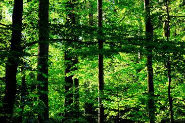 Bild mit Natur, Wald, Morgensonne