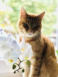 Bild mit Tiere, Katzen, süss