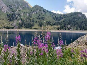Bild mit Natur, Blumen, Bergsee, See, Bergwelten, aussicht