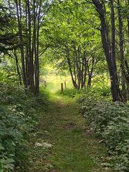 Bild mit Natur, Wald, Waldlichtung, Waldweg, Spaziergang, Erholung