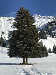 Bild mit Berge, Schnee, Schnee in den Bergen, Tannenbaum
