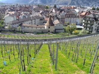 Bild mit Städte, Weinreben, Hauptstadt, Chur