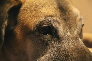 Bild mit Tiere, Augen, Haustiere, Hunde, macro