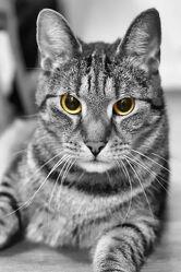 Die Augen der Katze