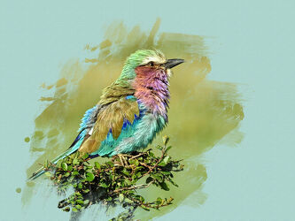 Bild mit Federn, Tier, Vogelart, Bunt, Africa, Wildtiere, Tierwelt, Federkleid