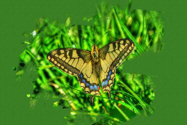 Bild mit Farben, Natur, Insekten, Flügel, Fliegen, Tier, Schmetterling, Farbenspiel