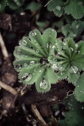 Bild mit Pflanzen, Blumen, Lila, Frühling, Makrofotografie, Flower, Flowers, Wassertropfen, Blumenfotografie, Marko