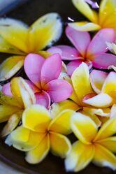 Bild mit Pflanzen, Blumen, Frühling, Makrofotografie, Flower, Flowers, Bunt, Farbenfrohe Kunst, Blumenfotografie, Marko