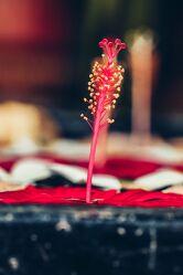 Bild mit Pflanzen, Blumen, Frühling, Makrofotografie, Flower, Flowers, Retro Art, VINTAGE, Blumenfotografie, Marko
