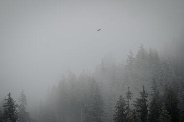 Bild mit Winter, Wolken, Vögel, Nebel, Wald, berg, Schweiz, Interlaken