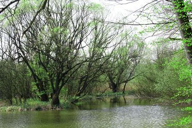 Bild mit Farben,Natur,Grün,Pflanzen,Landschaften,Bäume,Gewässer,Küsten und Ufer,Wälder,Seen,Flüsse,Sümpfe