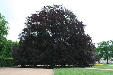 Bild mit Natur, Pflanzen, Gräser, Bäume, Orte, Parks, Nationalparks, Herbst, Baum, Park
