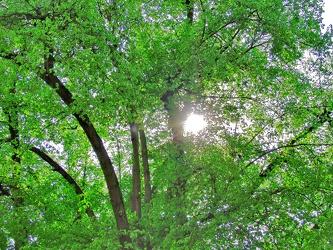 Bild mit Farben,Natur,Grün,Pflanzen,Gräser,Landschaften,Bäume,Jahreszeiten,Wälder,Frühling,Herbst,Wald,Lichtung,Baum,Baumkone