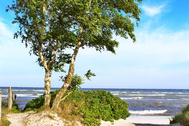 Bild mit Natur, Himmel, Bäume, Wolken, Laubbäume, Birken, Wellen, Sand, Baumkrone, Baum, Strand, Birke, Strandblick, Meerblick, Ostsee, Meer, Wolkenhimmel, Baumstamm, Düne, Sky, Birkenblätter, Birkengewächs, Sandbirke, Weißbirke, Warzenbirke, althochdeutsch Bircha, Birkenstamm, Laubbaum, Nature, Tree, Baumstämme, Seeblick, Dünengras, Urlaubsbild, Urlaubsfoto