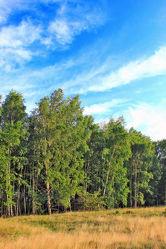 Bild mit Natur, Himmel, Bäume, Wolken, Wälder, Weiß, Laubbäume, Birken, Wald, Baumkrone, Baum, Birke, Wolkenhimmel, Baumstamm, Forest, Sky, Birkenwald, Birkenwälder, Birkenblätter, Birkengewächs, Sandbirke, Weißbirke, Warzenbirke, althochdeutsch Bircha, Birkenstamm, Laubbaum, Nature, Tree, Baumstämme, Heide, Gras, Wiese, Wiesengras, Mischwald