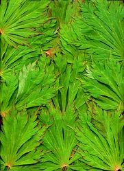 Blätterdschungel