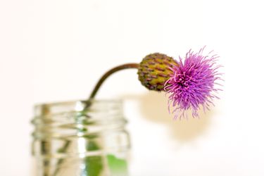 Bild mit Natur,Pflanzen,Blumen,Korbblütler,Disteln,Blume,Pflanze,Distel