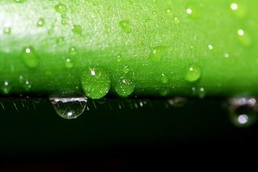Bild mit Farben, Natur, Elemente, Wasser, Grün, Pflanzen, Gräser, Schwarz, Wassertropfen, Waterdrop