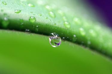 Drop of Rain 4