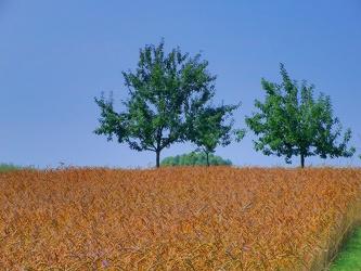 Bild mit Natur,Pflanzen,Gräser,Landschaften,Himmel,Bäume,Weiden und Wiesen,Architektur,Bauwerke,Gebäude,Bauernhöfe,Buschland