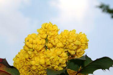 Bild mit Farben,Gelb,Natur,Pflanzen,Himmel,Bäume,Jahreszeiten,Blumen,Frühling