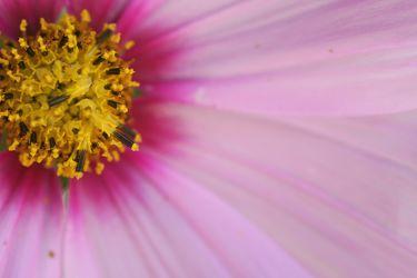Blumen Makro