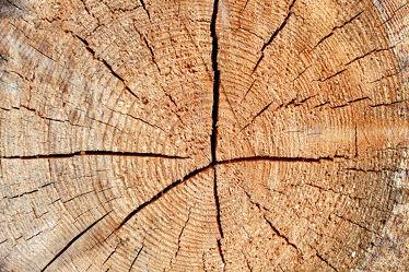 Holzstruktur Fichte 2