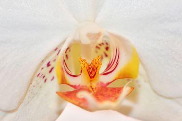 Bild mit Farben,Natur,Pflanzen,Blumen,Weiß,Rosa,Orchideen,Blume,Orchidee
