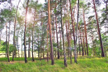 Bild mit Natur, Grün, Himmel, Bäume, Nadelbäume, Wälder, Weiß, Laubbäume, Wald, Baumkrone, Lichtung, Baum, Waldweg, Nadelbaum, Pinie, Kiefer, Kiefergewächs, Baumstamm, Landschaft, Märchenwald, Waldblick, Blick in den Wald, Forstwirtschaft, Forest, Waldbild, Waldbilder, Wald Bild, Wald Bilder, Birkenwald, Birkenwälder, Laubbaum, Nature, Tree, Baumstämme, Mischwald, Baumgewächs, Baum-Optik, Waldrand, Blick in den Wald mit Gegenlicht, Waldboden